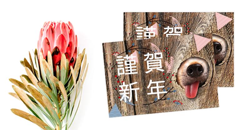 2018年戌年の年賀状にオススメ日本語フォント
